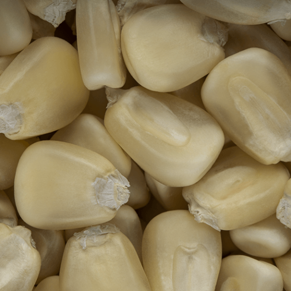 SnackMaize (White)