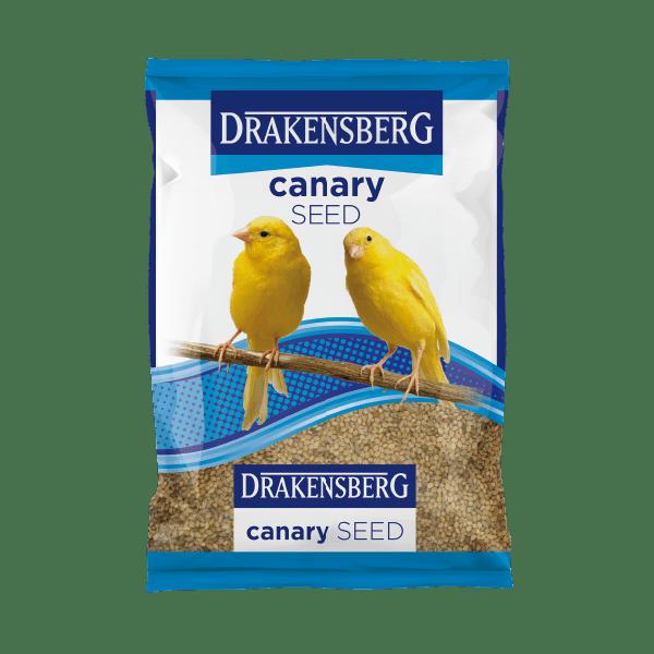 Drakensberg Canary Seed