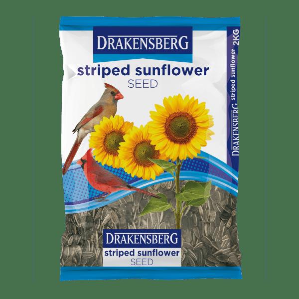 Drakensberg Striped Sunflower Seed