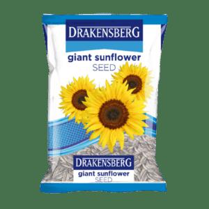 Drakensberg Giant Sunflower Seed