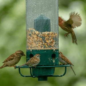 This is how you can attract more birds to your garden